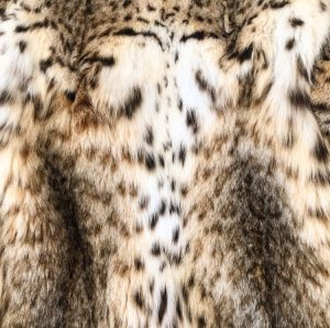 The 9 Types Of Fur You Need To Know About